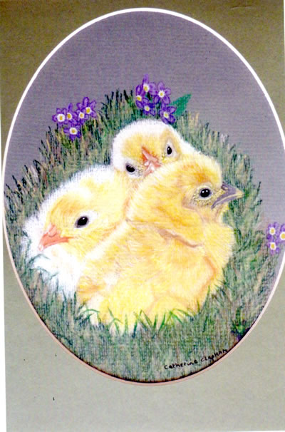 gallery/Members_Paintings/Catherine_Clapham/Three_Chicks_Pencil_SOLD.jpg