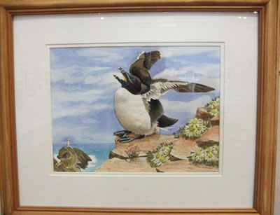 gallery/Members_Paintings/Jean_Webster/A_Young_Razorbill_wcolour_90aa.jpg